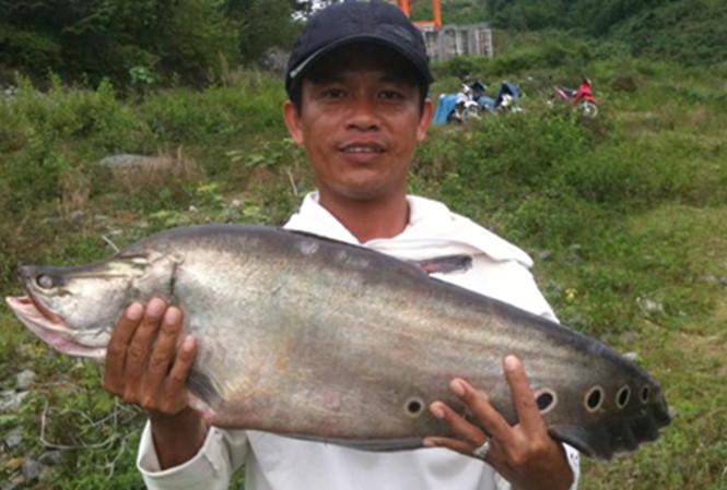 cá thác lác 7kg