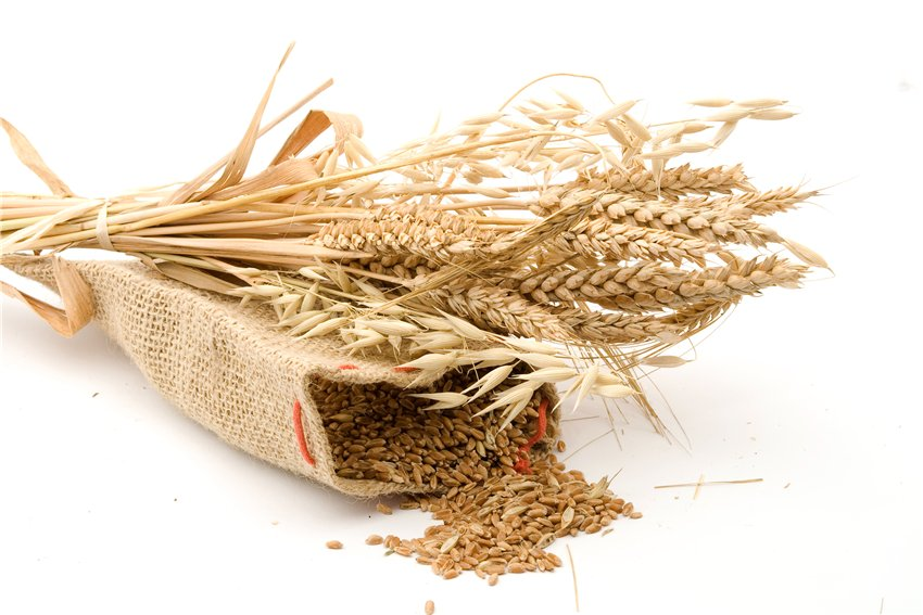 các loại bánh dễ làm từ bột mì
