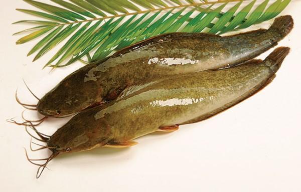 cách chế biến cá trê lai-1