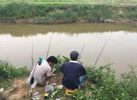 Cách làm mồi câu cá trê sông - 2