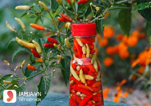 Công dụng hữu ích của món ớt ngâm với nước mắm 1