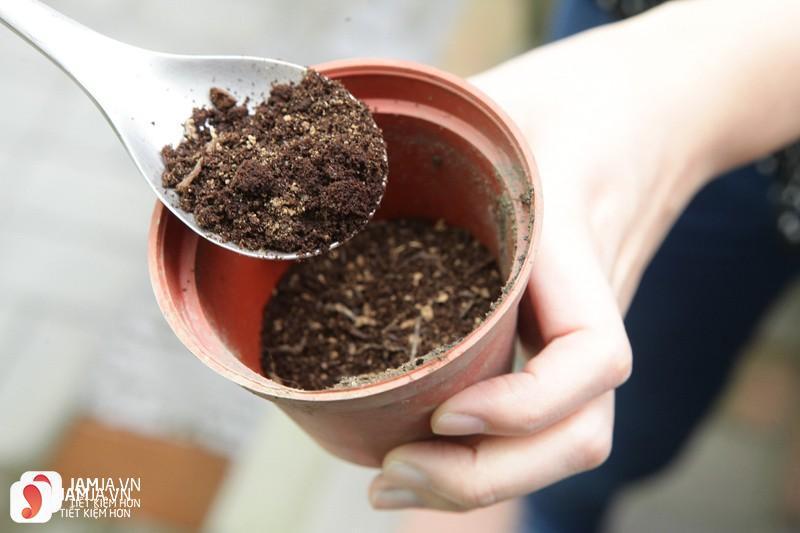 Tác dụng của bã cà phê với cây trồng