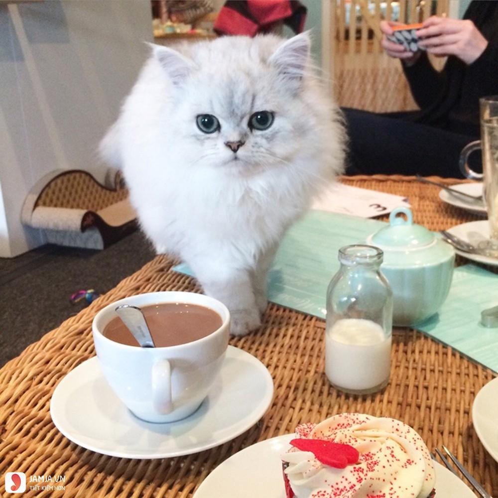 Cafe Mèo Cần Thơ 1