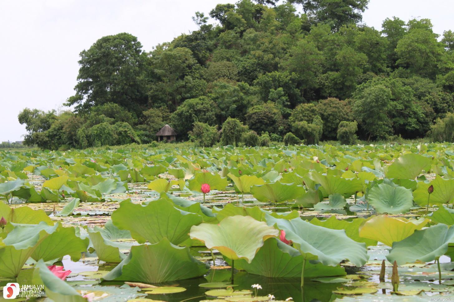 du lịch sinh thái hồ quan sơn