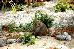 Những chú khỉ tinh nghịch sẽ làm bạn thích thú