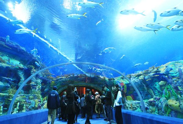 Tham quan Viện Hải dương học là một trải nghiệm rất thú vị