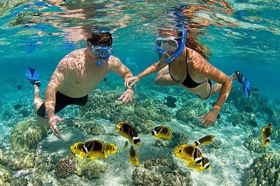 Hoạt động ngắm san hô là trải nghiệm rất thú vị khi bạn đến với Phú Quốc