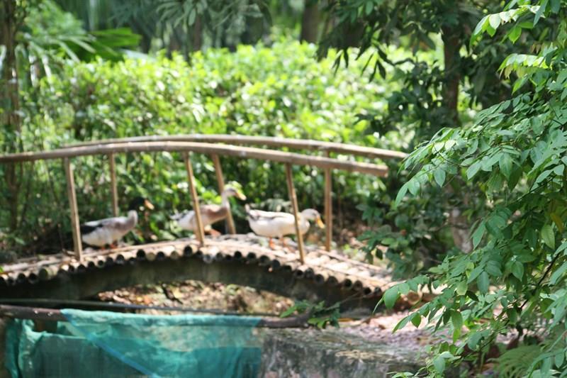Vịt cổ xanh ResortĐịa điểm họp lớp gần Hà Nội 4