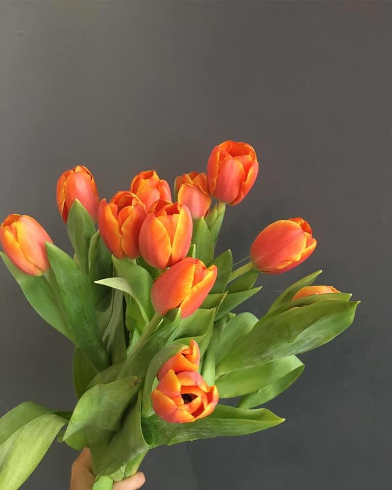Hoa ngày 20/11, Hoa tulip
